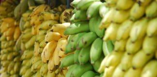 PlaasTV, banana, RSG Landbouandbou