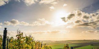 vinpro, wine industry, ban