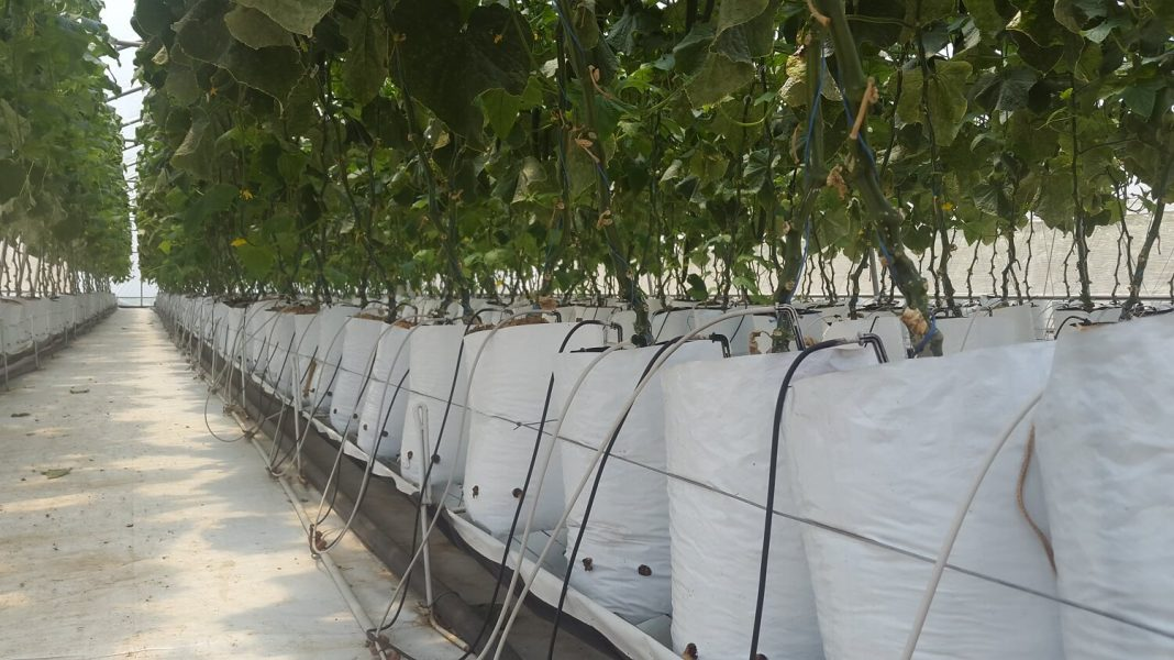 tunnel irrigation