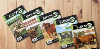 Stockfarm, e-magazine