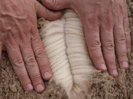 Merinowol, wol, wol, wool