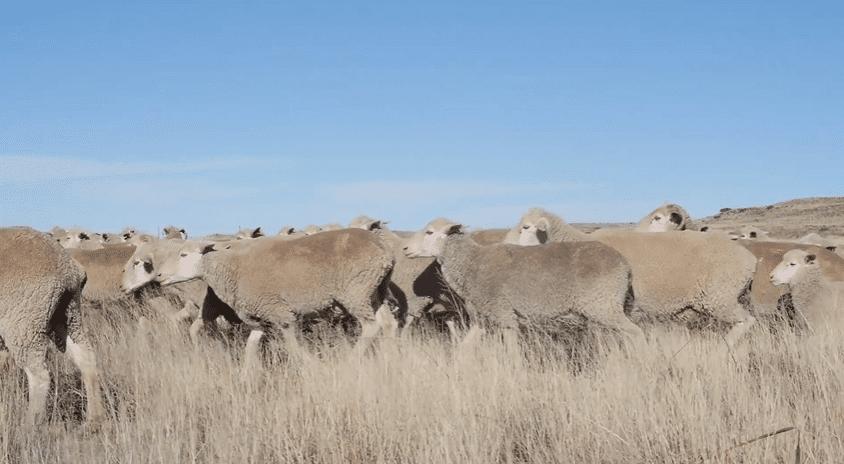 wool, wolmark