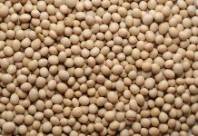 full-fat soya beans