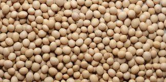 full-fat soya beans