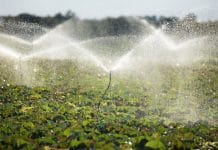 open-field sprinkler irrigation