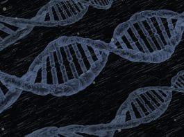 Genomiese, teelwaardes, breeding