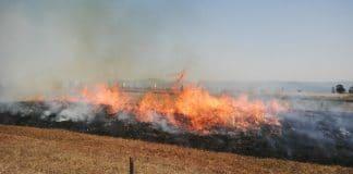 Plaas TV, brandbestuur, wegholveldbrande