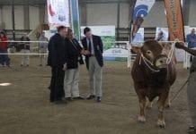 Plaas TV, stud cattle